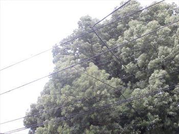 03_R.JPG